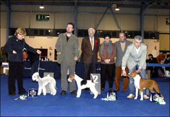 Dreaming Colacoda Best In Show